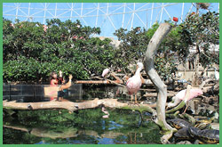I fenicotteri rosa