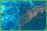 Fondale Marino 005 + corallo