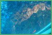 Fondale Marino 006 + corallo