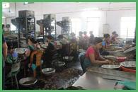 La fabbrica degli anacardi